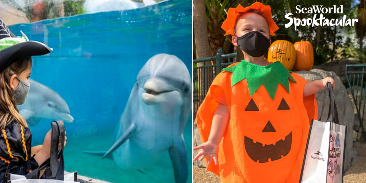 SeaWorld San Diego HALLOWEEN SPOOKTACULAR plus new HOWL-O-SCREAM bring seasonal fun for 2021