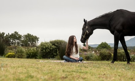 BLACK BEAUTY is a gorgeous film on the bonds between horse and human