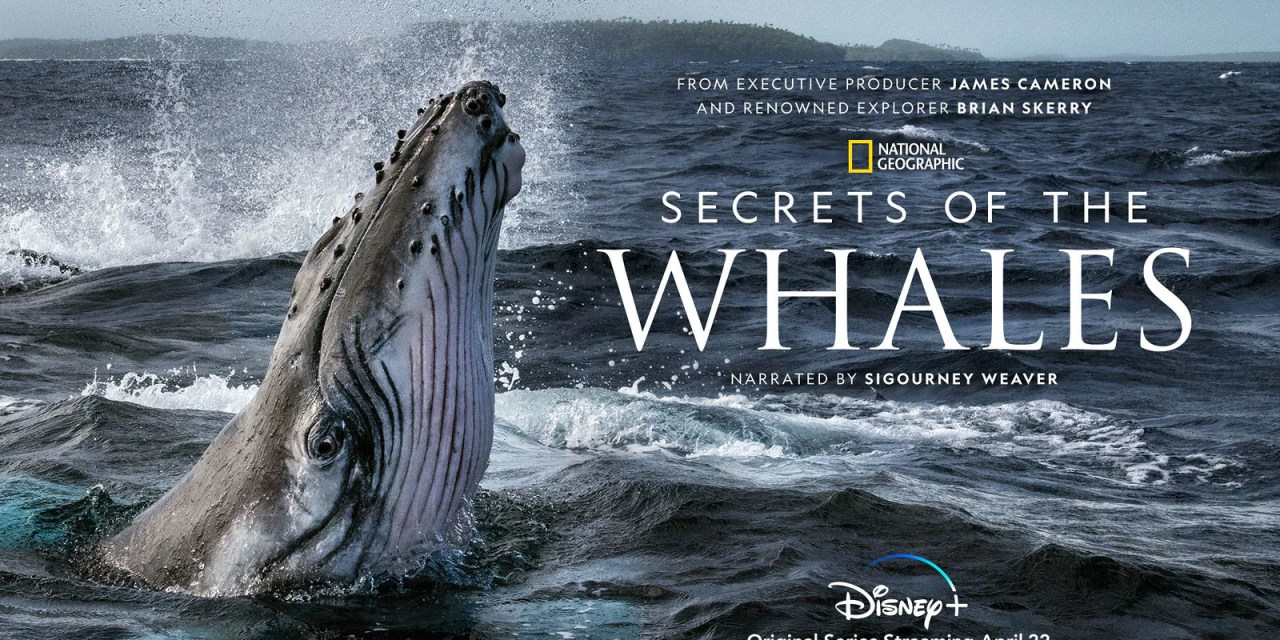 WATCH: New trailer, keyart for SECRETS OF THE WHALES series